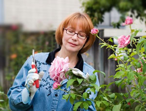 Woman pruning rosebush